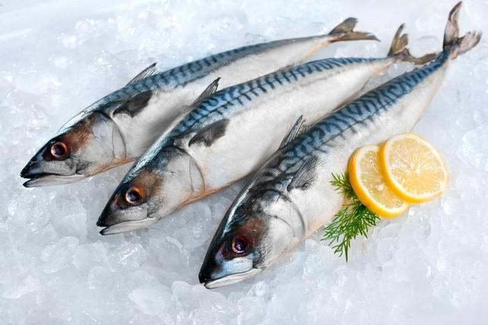 ikan makarel hasil laut indonesia