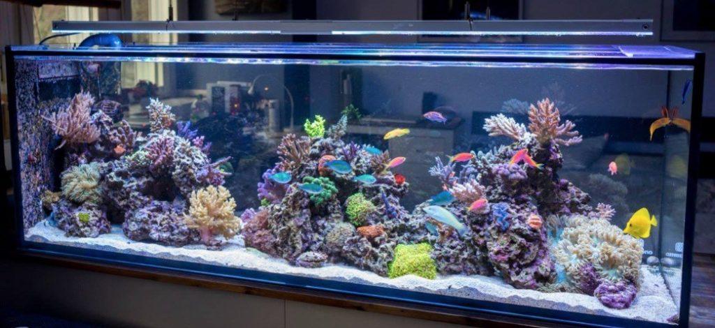 cara merawat akuarium laut