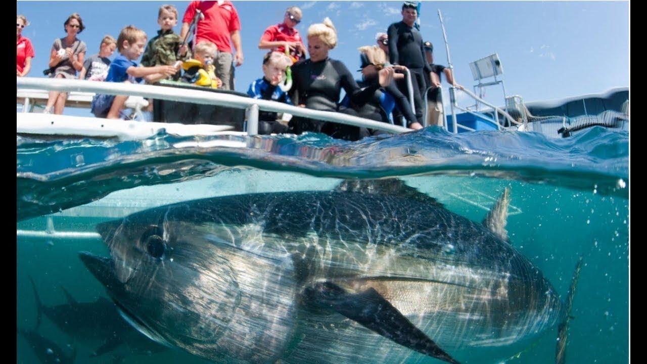 Ikan Besar Yang Pernah Tertangkap Pancingan