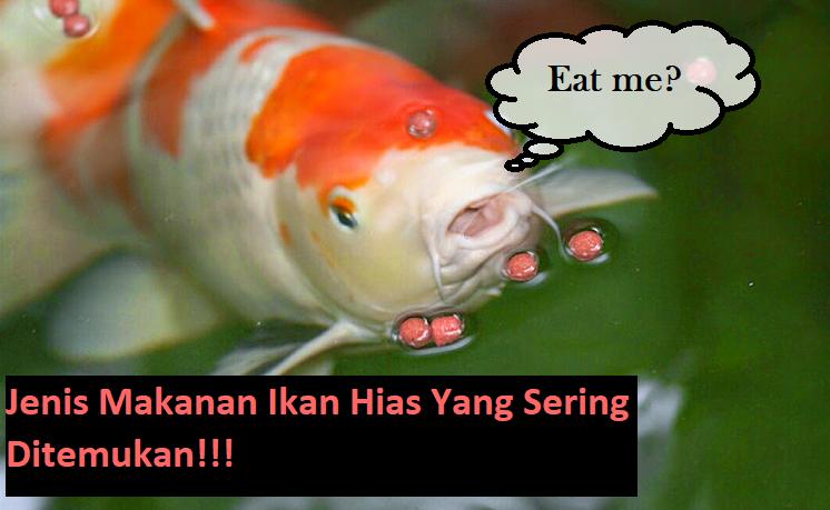 Jenis Makanan Ikan Hias Yang Sering Ditemukan!!!