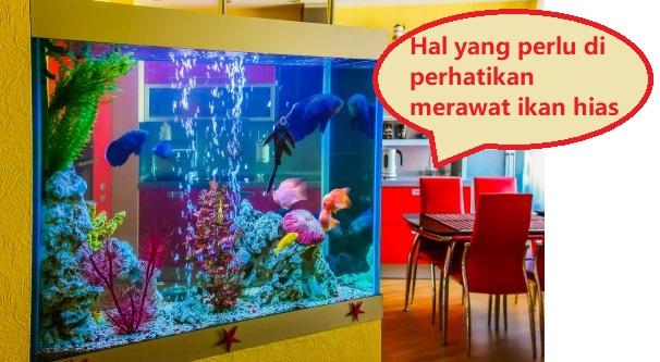 Hal Yang Harus Diperhatikan Saat Memelihara Ikan Hias!!!