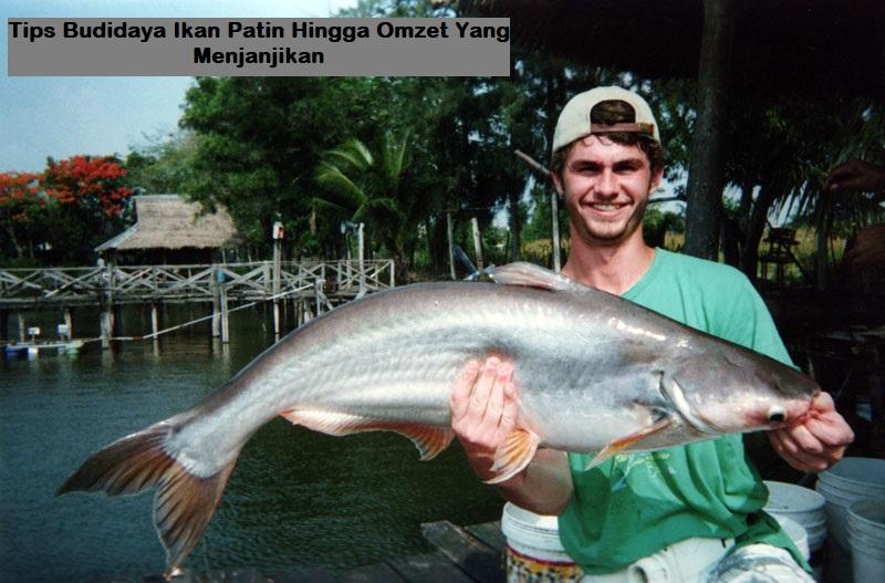 Tips Budidaya Ikan Patin Hingga Omzet Yang Menjanjikan