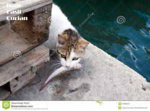 Ikan Hasil Curian