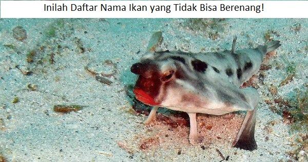 Ikan Tidak Bisa Berenang