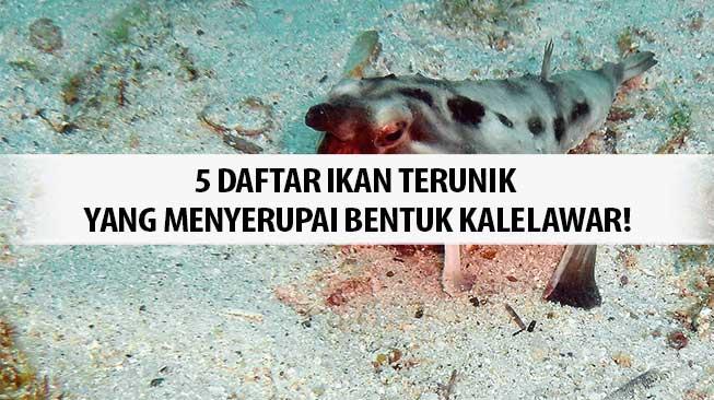 Ikan terunik