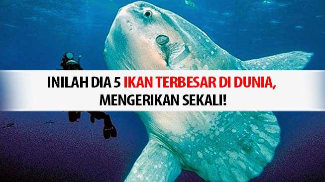ikan laut terbesar