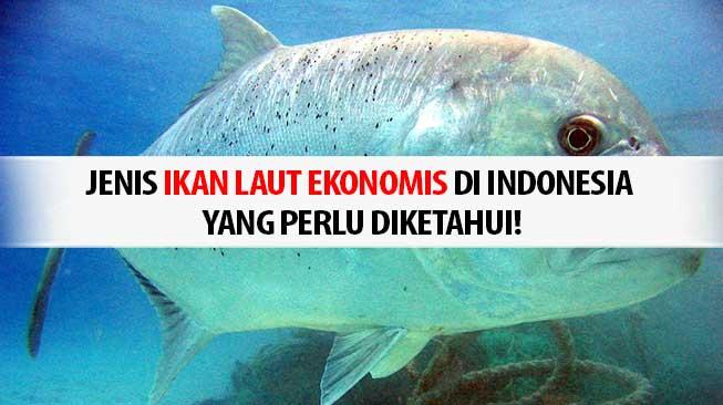 Ikan Laut Ekonomis