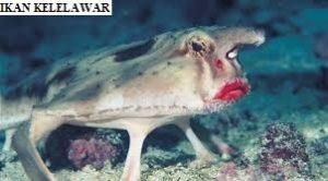 Ikan Kelelawar