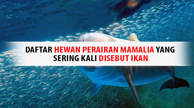 Hewan Mamalia yang Sering Disebut Ikan