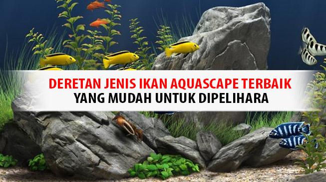 jenis-ikan-aquascape-terbaik