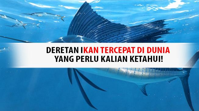 Ikan tercepat di dunia